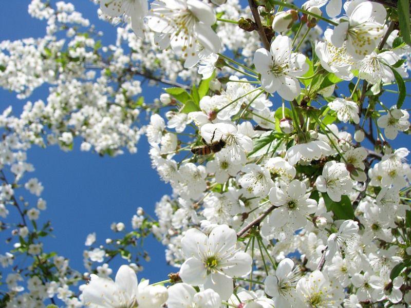 весенний сад.близнецовые пламена